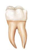 شکستگی ریشه دندان